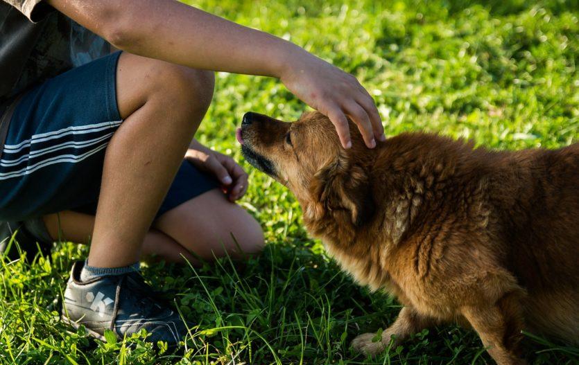 Mazlíček a dětská alergie: lze to skloubit?