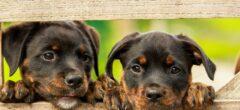 Koupit či nekoupit domácí zvířátko?