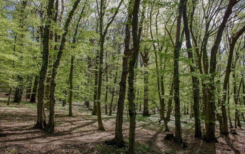 Historický význam Kunratického lesta
