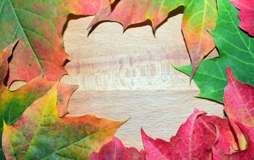 Podzimní tvoření s listy