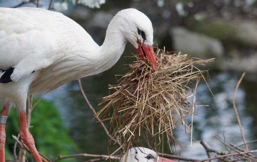 Hnízdící instinkt nemine drtivou většinu maminek