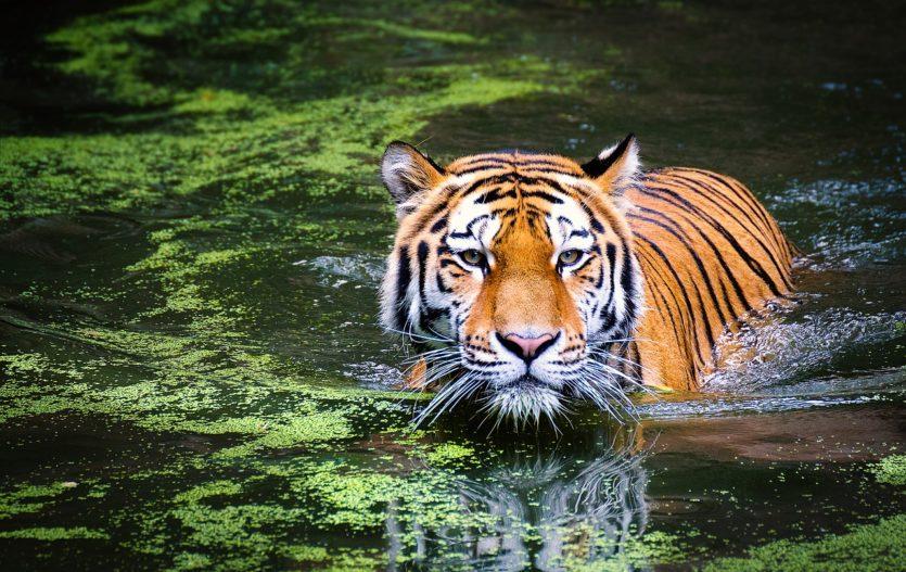 Tyto zoologické zahrady si zamilujete!