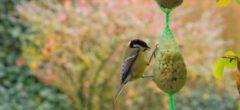 Tvořivá dílna: lojové koule pro ptáčky